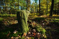 Stump in the autumn sunlit with sunlight. Nature Stock Photography