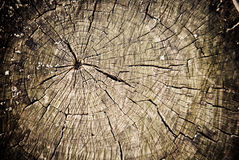 Stump background Royalty Free Stock Photo