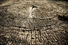 Stump background Royalty Free Stock Photography