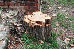Stump. Royalty Free Stock Images