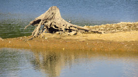 Stump on the bank Royalty Free Stock Photography