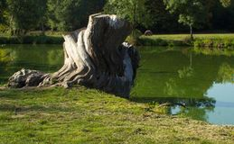 Stump on the bank of the river. royalty free stock photo
