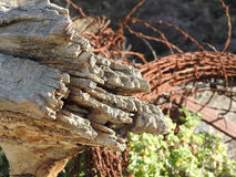 Stump and barb wire Royalty Free Stock Image