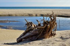A stump on the beach Stock Image