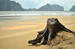 Stump on the beach Royalty Free Stock Photo