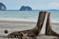 Stump at the beach. Stump at Yong Ling Beach beach Royalty Free Stock Images