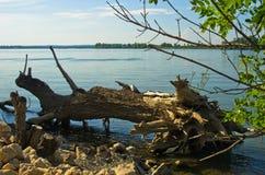 Stump at the coast of Danube river near Ram Stock Photo