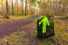 Stump con una freccia verde in un legno Immagini Stock Libere da Diritti
