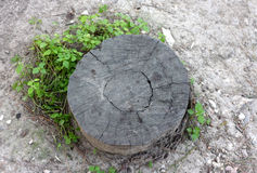 Stump of a cut tree Stock Photo