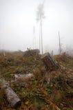 Stump of cut tree. Royalty Free Stock Image