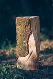 Stump of a cut tree Stock Image