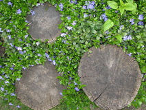 Stump dans le jardin parmi les fleurs bleues sensibles Photos libres de droits