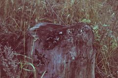 Stump. The darkness and blue of old rotten stump Royalty Free Stock Photos