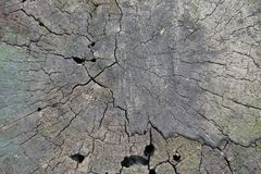 Stump of dead cottonwood tree. From above stock photography