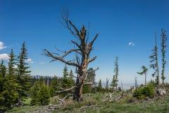 Stump of Dead Tree in Wyoming Stock Photos