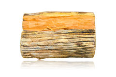 Stump dead wood Rough cut of from tree isolated on white backgro Royalty Free Stock Photos