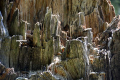 Stump detail Stock Images