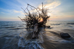 Stump in dusk at beach side with motion of waves Stock Photo