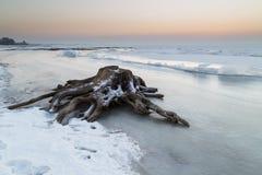 Stump en la orilla de un lago congelado Foto de archivo libre de regalías