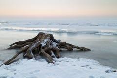 Stump en la orilla de un lago congelado Fotografía de archivo libre de regalías