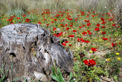 Stump and flowers. The stump in an environment of colours Stock Image