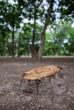 Stump in forest Royalty Free Stock Images