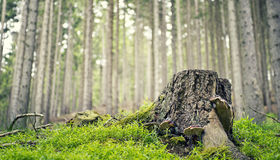 Stump in the forest Stock Photos