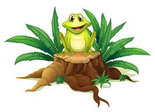 A stump with a frog Royalty Free Stock Image