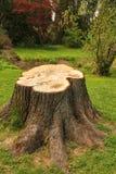 Stump in the garden. Big stump in the garden Stock Photography