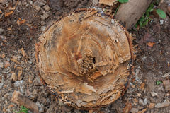 Stump in the garden. Stock Images