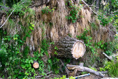 Stump on the grass background. Stump and grass on the river bank stock photos