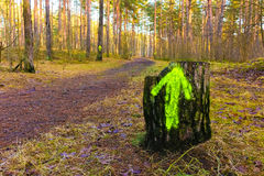 Stump with a green arrow in a wood. Stump with a green arrow in an autumn wood Royalty Free Stock Images