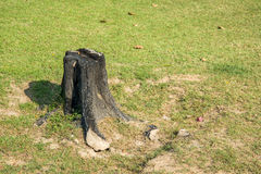 Stump. A stump on green grass Stock Image
