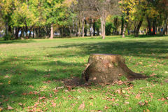 Stump, green grass, dry leaves and trees Royalty Free Stock Photography