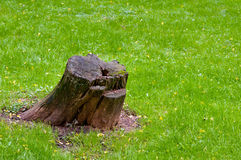 Stump Royalty Free Stock Photos