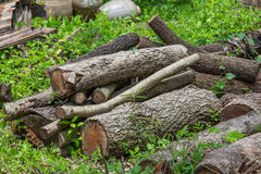 Stump on the green grass Royalty Free Stock Photos