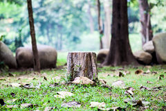 Stump on green grass in forest. Photo of stump on ground with green grass in forest Royalty Free Stock Photo