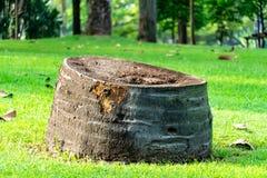 Stump on green grass or graden stock photos