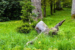 Stump in green grass in the middle of a forest Stock Photo