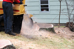 Stump grinding. Worker operating machine to do stump grinding Stock Image