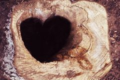 Stump with a hole in the form of a heart. Postcard with a stump in which there is a hole in the form of a heart Royalty Free Stock Image
