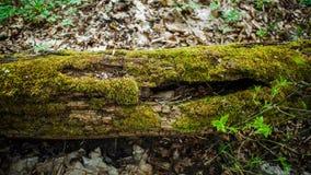 Stump i det gröna gräset Arkivfoton