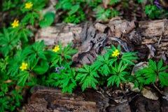 Stump i det gröna gräset Arkivfoto