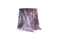 Stump. Royalty Free Stock Image
