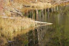 Stump Lake royalty free stock image