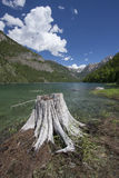 Stump at Lake MacDonald. Stock Photography