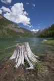 Stump at Lake MacDonald. Stock Photography