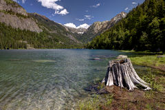 Stump by Lake MacDonald. Stock Image
