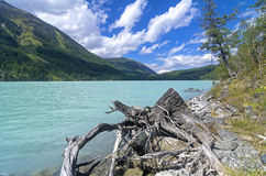 Stump on the lake shore. Kucherla lake. Altai Mountains, Russia. Stock Photos