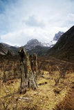 Stump meadowland and  jokul. Taken in western sichuan plateau Stock Photography